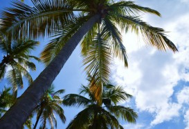 Ausflugsvideo: Schnorcheln am Anse Beach (St. Lucia)