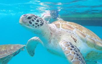 Schwimmen mit Schildkröten auf Barbados – Unser Video